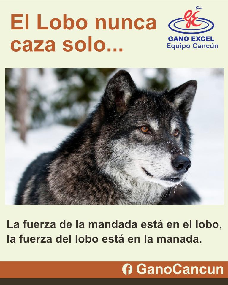 El Lobo nunca caza solo...